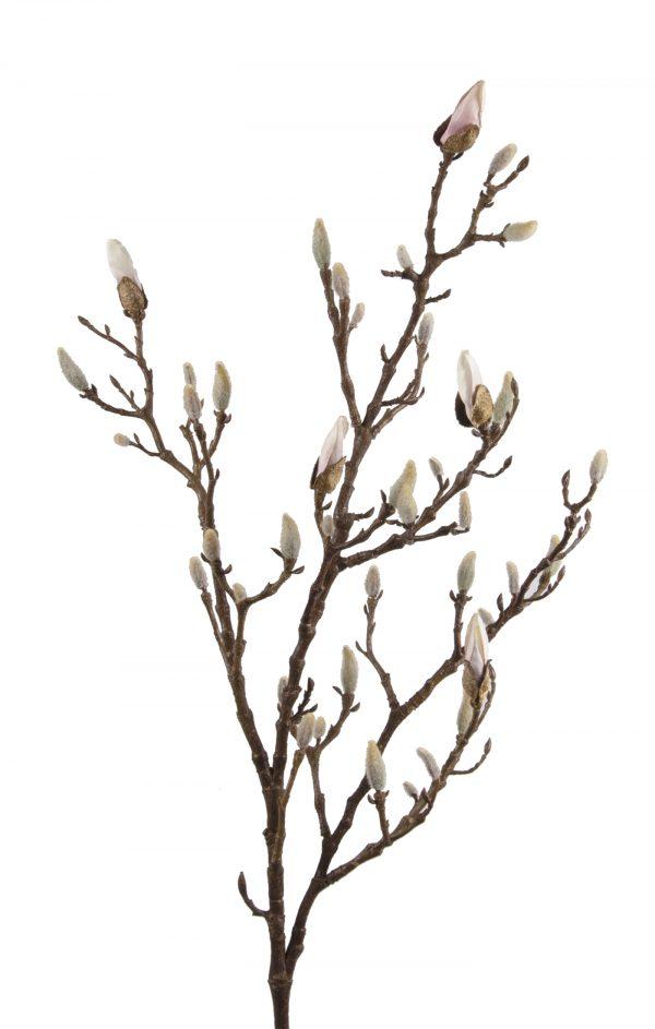 magnoliatak
