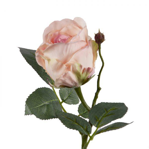 zachtroze roos