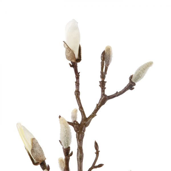 witte magnolia in knop
