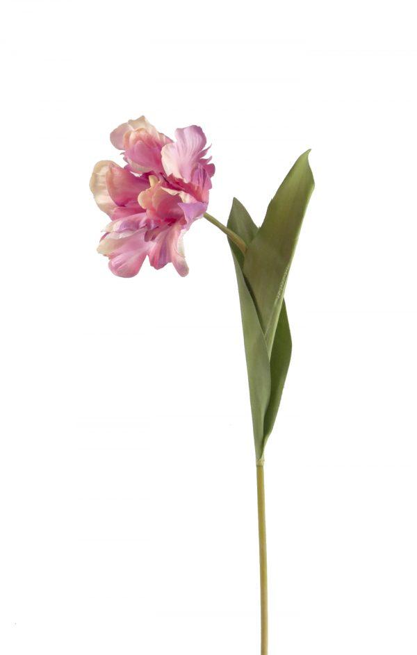 roze parkiettulp