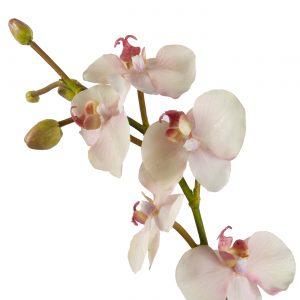kunst orchideeplant