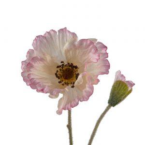 roze schijnpapaver