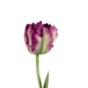 luxe zijden tulp