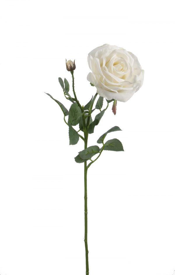 grote zijden roos