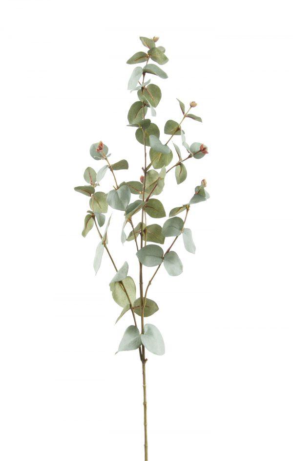 kunst eucalyptus