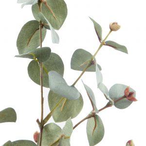 zijden eucalyptustak