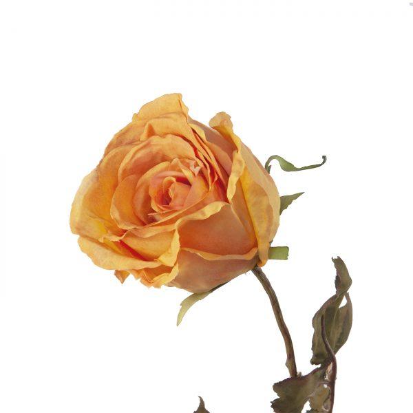 retro zijde roos
