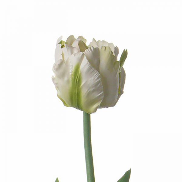 Zijden tulp