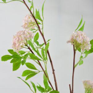 roze viburnum