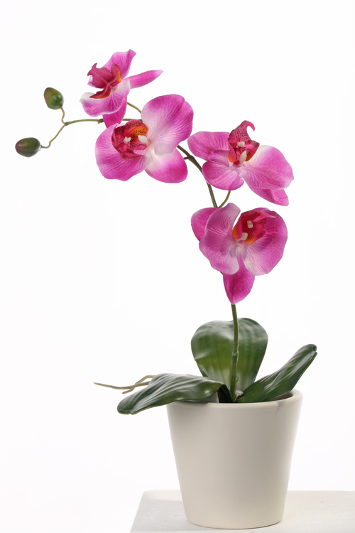 orchideeplantje